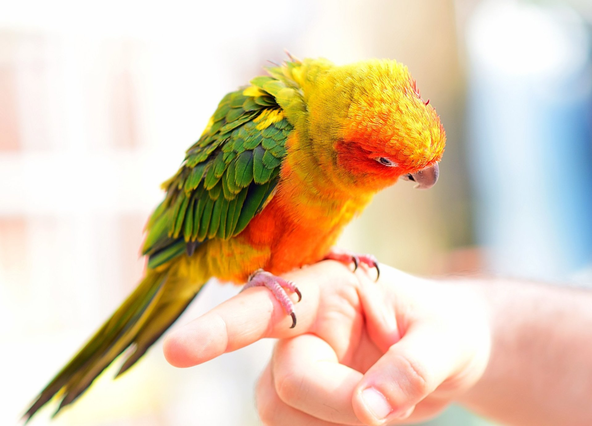 pappagallo sulle mani di un veterinario