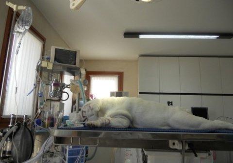 anestesia gassosa e tiva