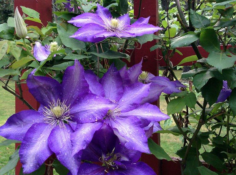 Beautiful flowers in Leuralla garden