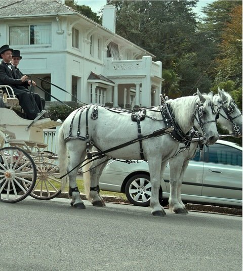 Wedding Carriage going to the venue