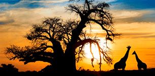 prenotazione viaggi africa