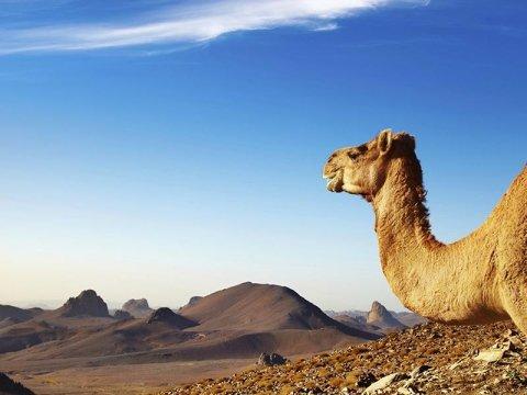 escursioni guidate nel sahara