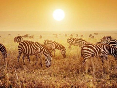 escursioni in africa