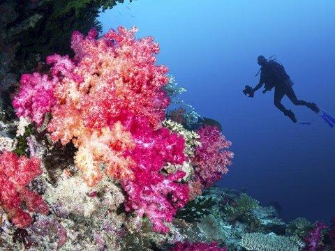 vacanza isole fiji