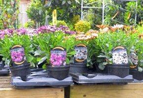 Garden centre - Loddon, Norwich - Loddon Garden & Seed Centre - Plants