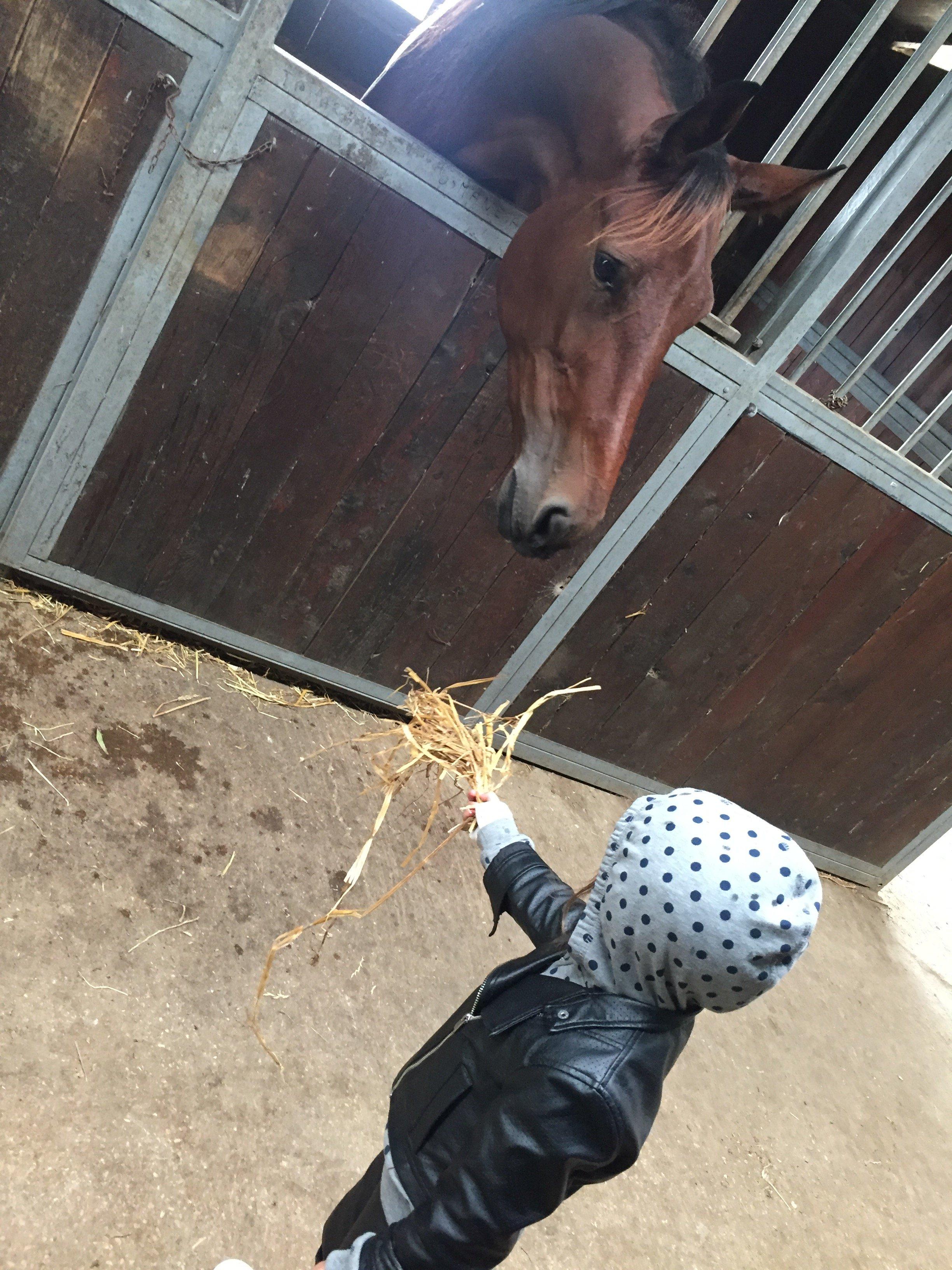 Bambino che dà da mangiare a un cavallo