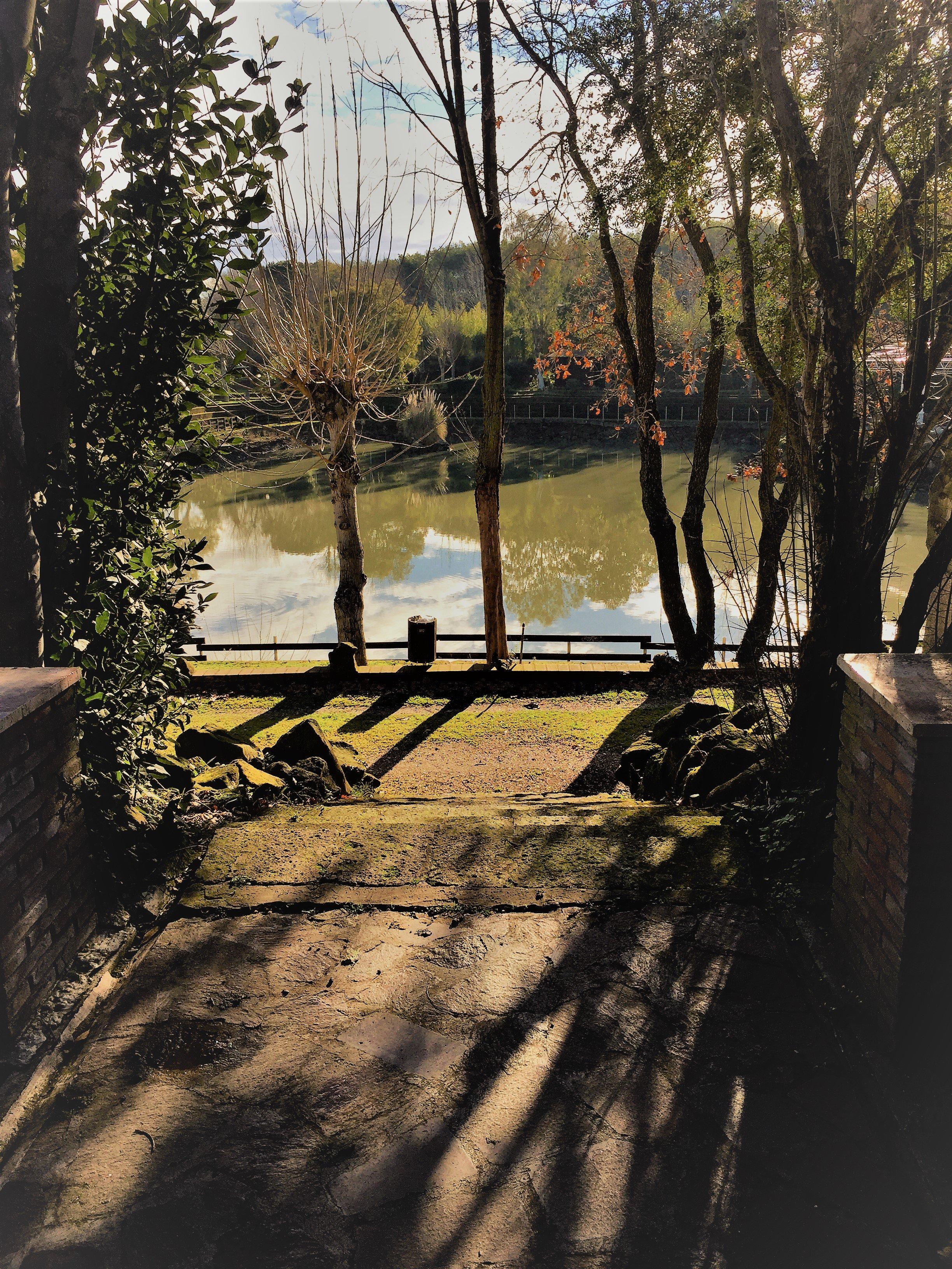 Vista della riva di un lago fiancheggiata da alberi