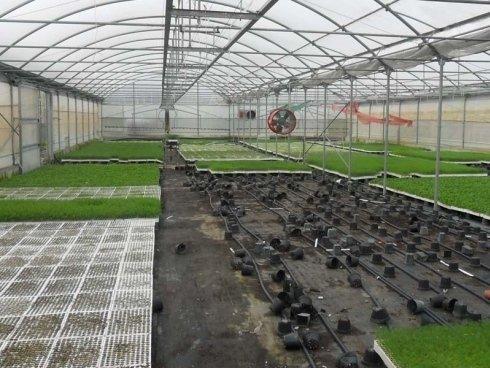 serra con piante