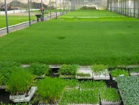 diverse piante