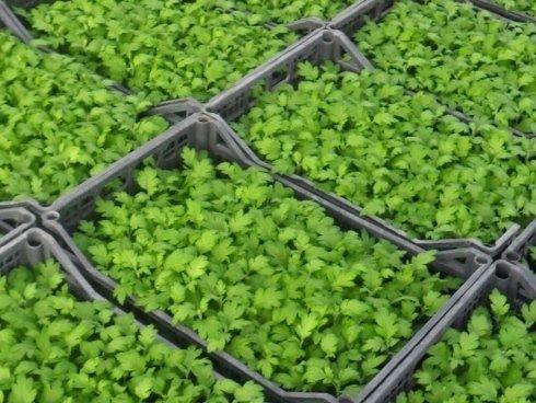 prodotti in serra