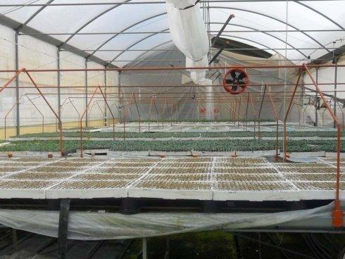l´impianto di irrigazione