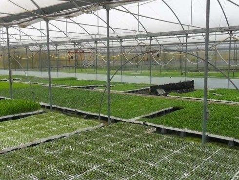 piante in serra con irrigazione