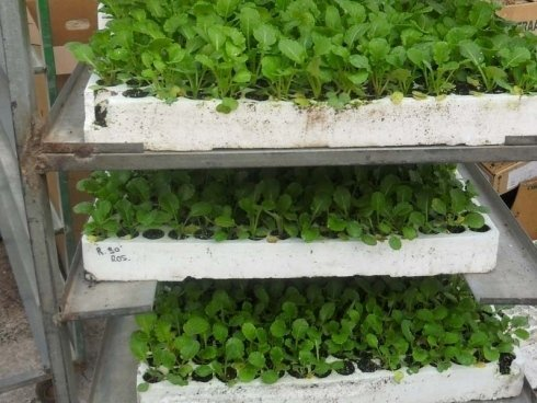 piante in carrello