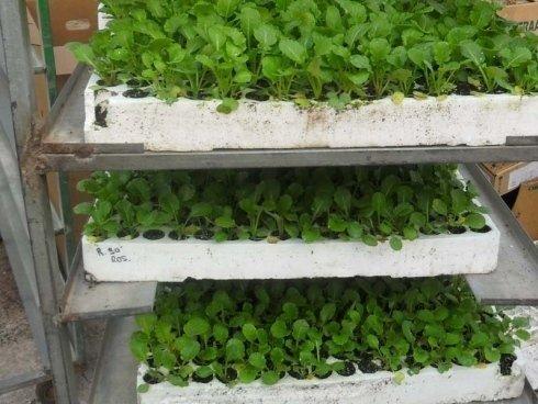 piante pronte per la vendita