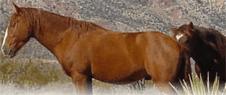 cure per cavalli, clinica veterinaria, clinica equina, Campagnano Romano, Roma