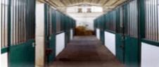 degenza per cavalli, clinica veterinaria, clinica equina, Campagnao Romano, Roma