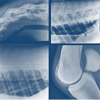 radiologia cavalli
