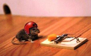 Trappole convenzionali per topi e ratti