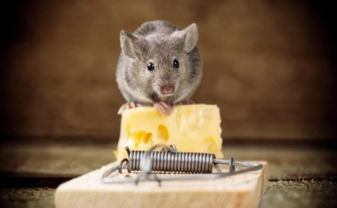 Trappole per topi convenzionali