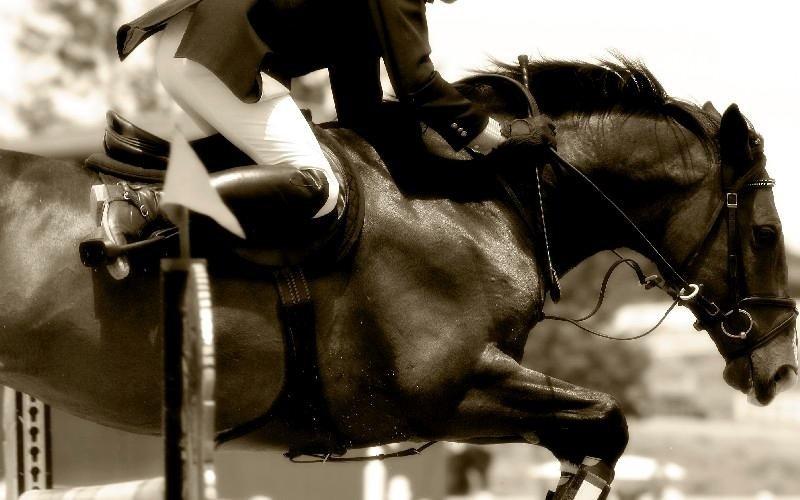 Corsi di monta Country Club Roma Equitazione