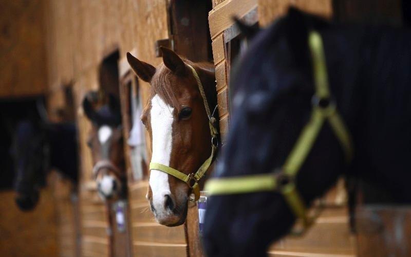 Trasporto cavalli Country Club Roma Equitazione