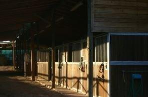 servizi Country Club Roma Equitazione