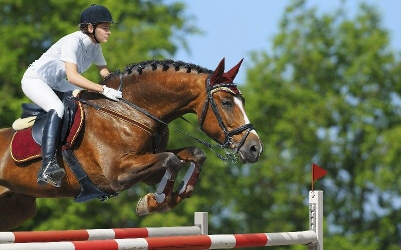 Salto ostacoli Country Club Roma Equitazione