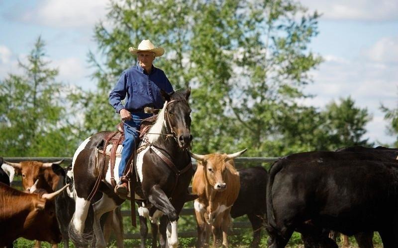 Servizi centro equitazione Country Club Roma Equitazione