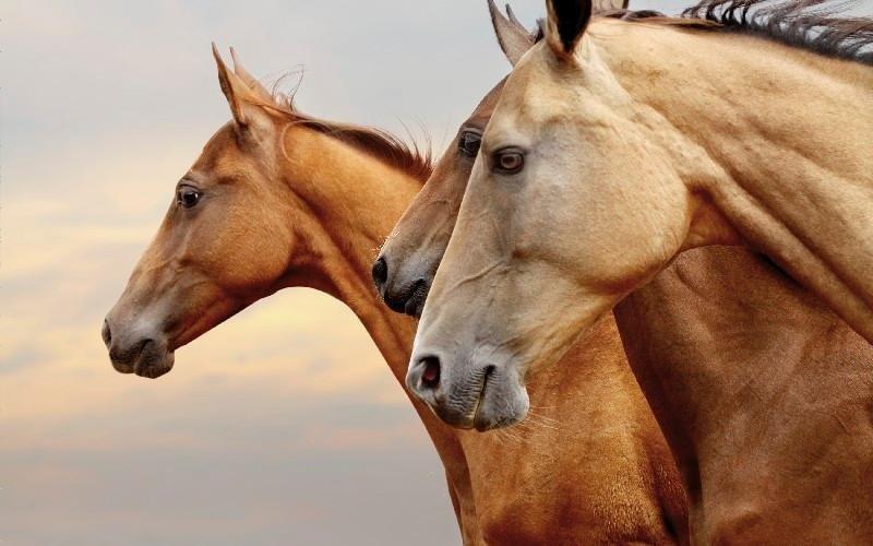Programma Country Club Roma Equitazione