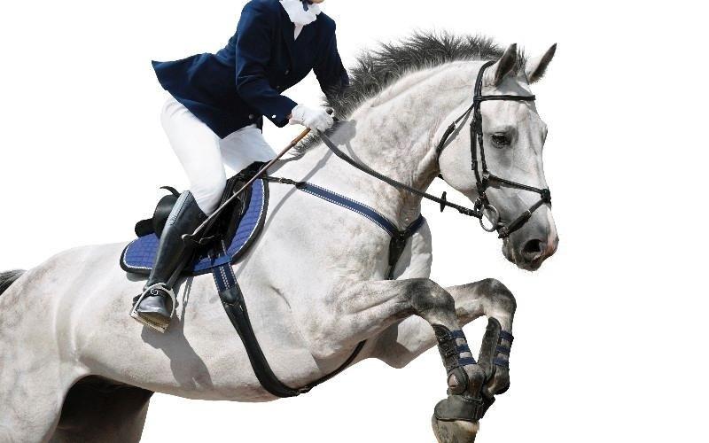 Salto ad ostacoli Country Club Roma Equitazione