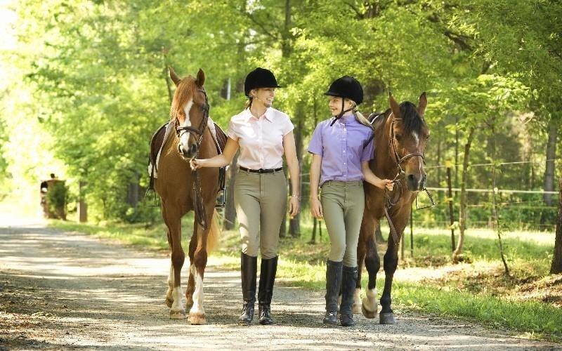 Addestramento cavalli Country Club Roma Equitazione