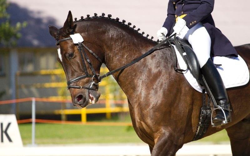 Abbigliamento da gara Country Club Roma Equitazione