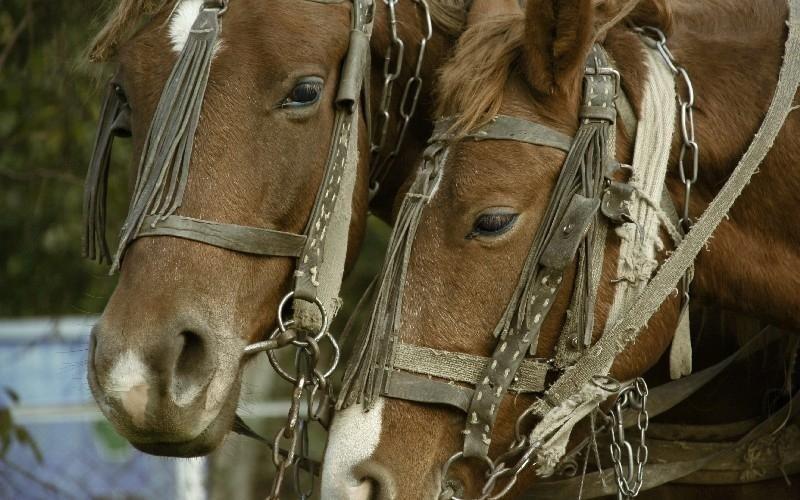 Esercizio fisico cavalli Country Club Roma Equitazione