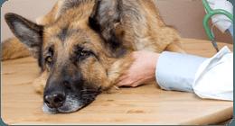 Cura degli animali