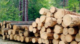 legname di prima qualità