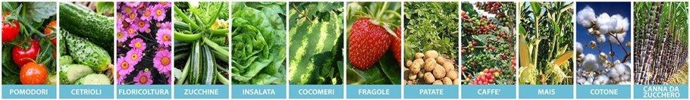 coltivazioni idonee all'utilizzo della manichetta Italtape