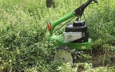 concime-erba