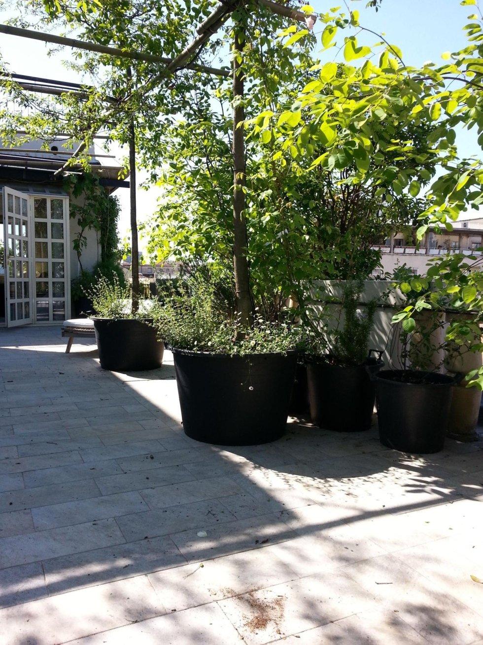 Realizzazione giardino su progetto