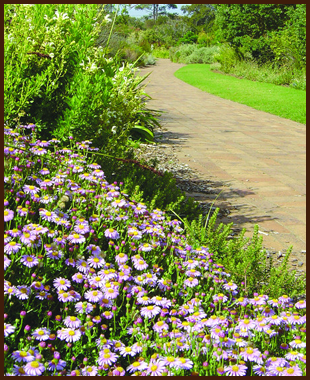 Flowers next to a paved path