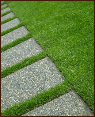 A lawn with paving along it