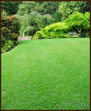 A large lawn