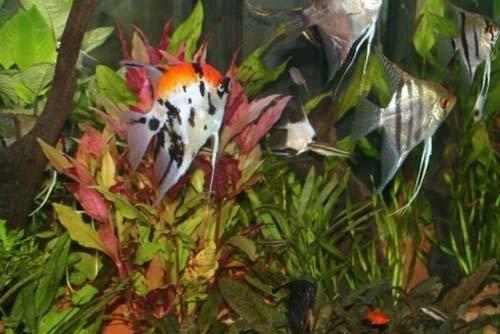 piante acquatiche e pesci tropicali