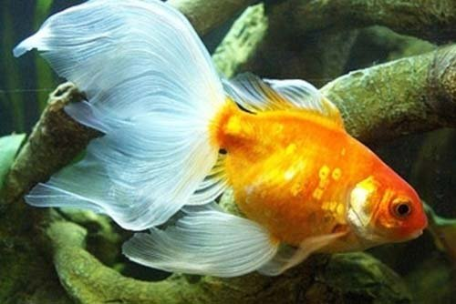 pesce in acquario