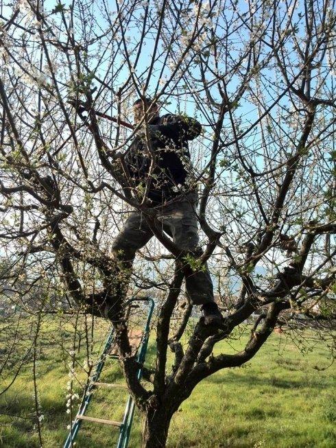 Lavori di potatura alberi