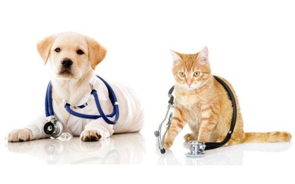 prodotti di veterinaria in parafarmacia scandura
