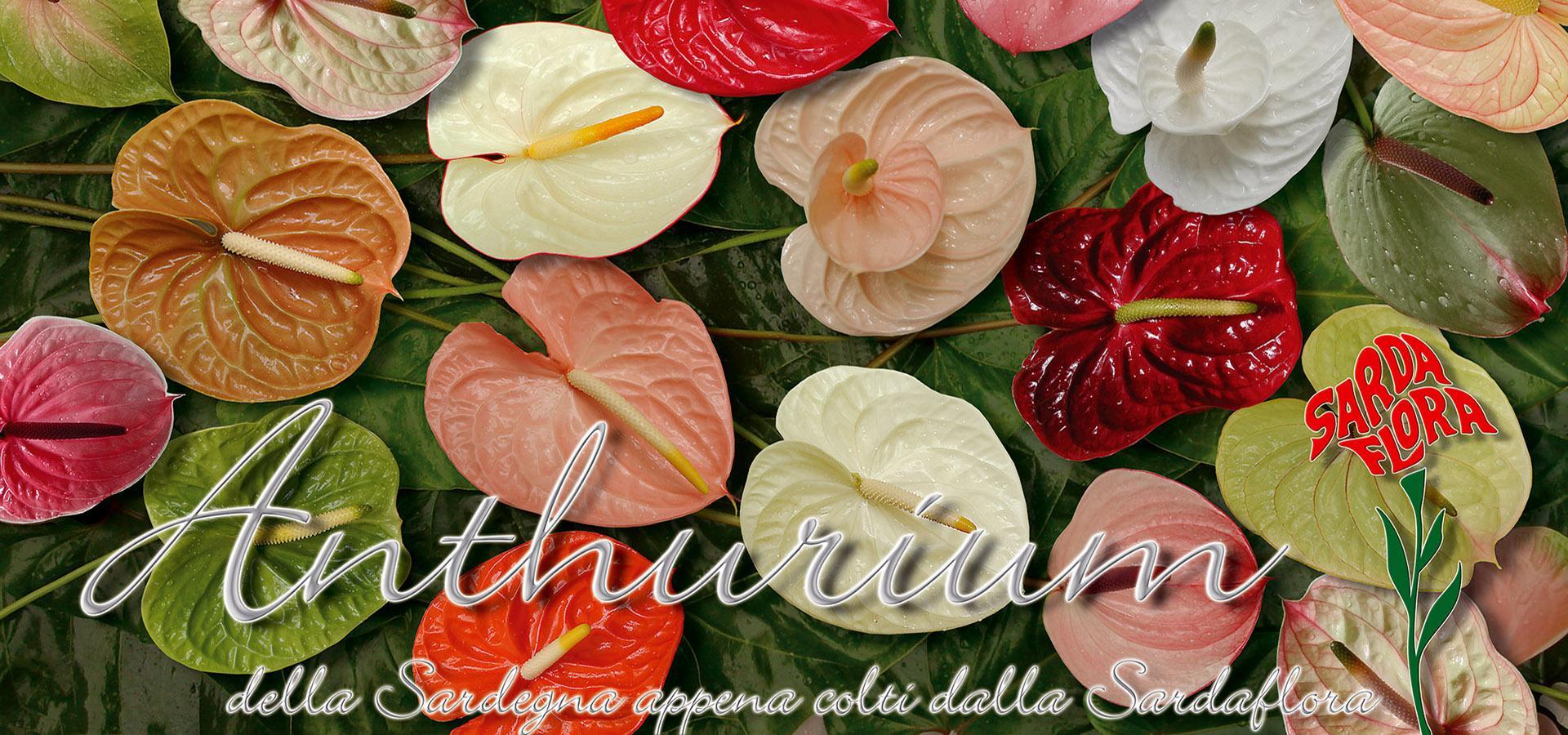 Sardaflora, Fiori Recisi e appena colti Decimomannu