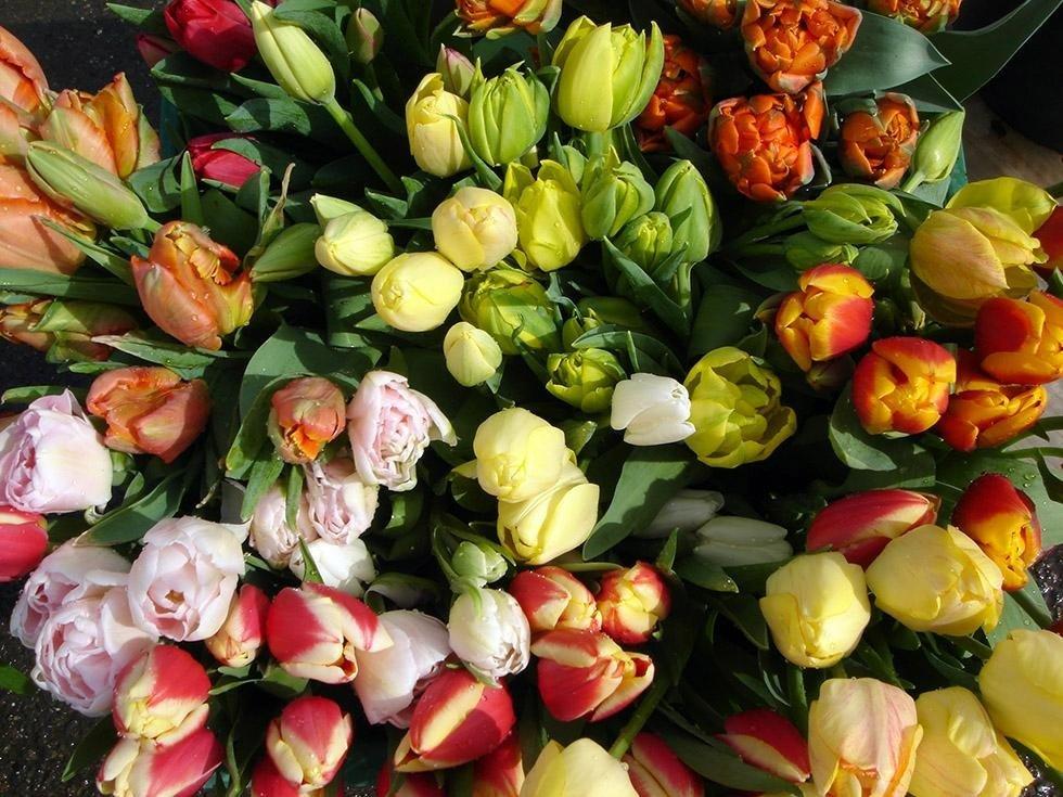 Tulipani Freschi