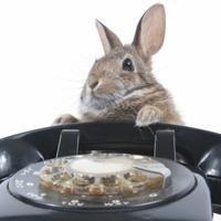 Contattare veterinario per urgenze