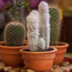 cactus piccole dimensioni