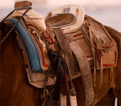 assortimento articoli per cavalli e cavaliere